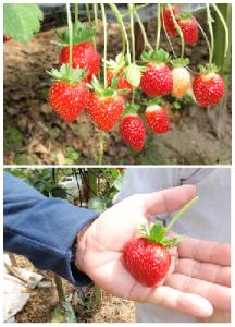 Malaysia Organic Fertilizer, Organic Fertiliser, BioFertilizer – BioJadi